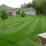 large backyard mowing service