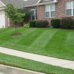 lawn care small yard