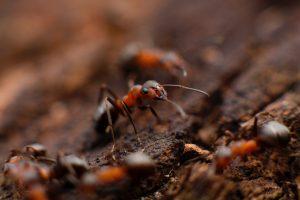 Turf & Pest control columbia, MO