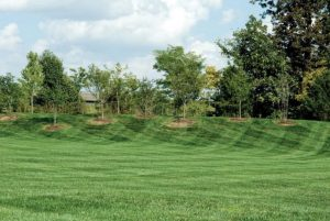 lawn care services columbia mo